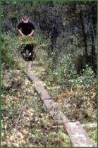 South Jersey moss raker