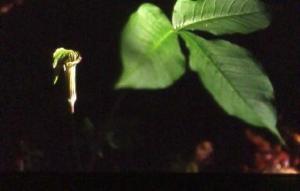 botanicals0133