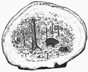 mushroombear