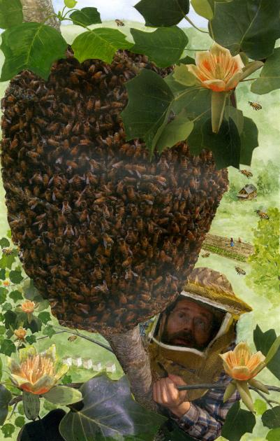 swarm tree cover