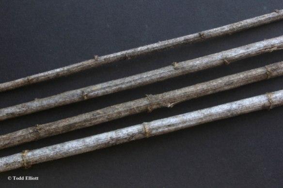 Artichoke8451