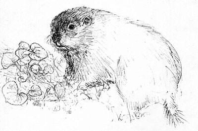 groundhog-recline