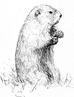 groundhog-upright