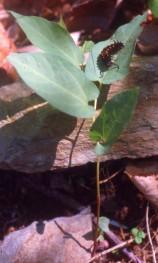 butterfly0022,,